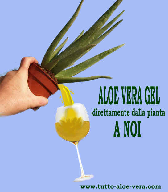Juice ALOE VERA GEL is like drinking directly from the plant