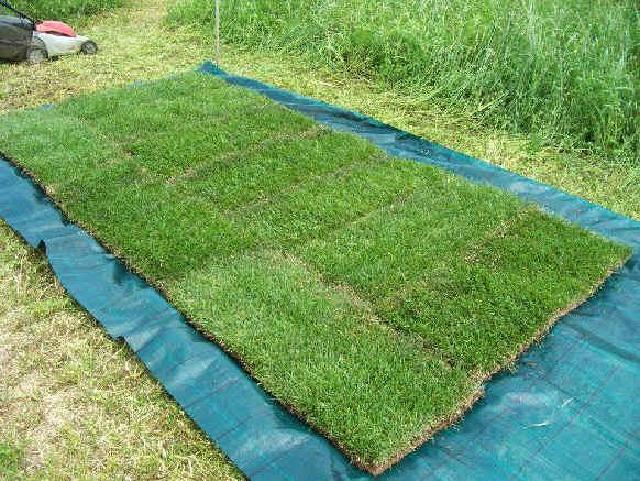 5 rotoli di prato erboso erba vera venduta a rotoli 45